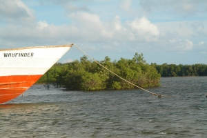 Davila, Pasuquin mangroves