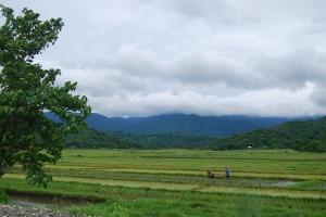 Verdant Ilocos