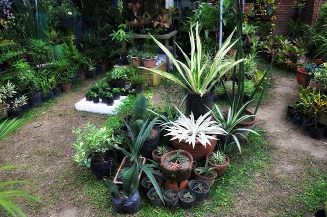 Pinoy Garden Garden Ftempo